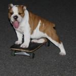 Gunner Puppy