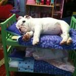 Biggie asleep at last!